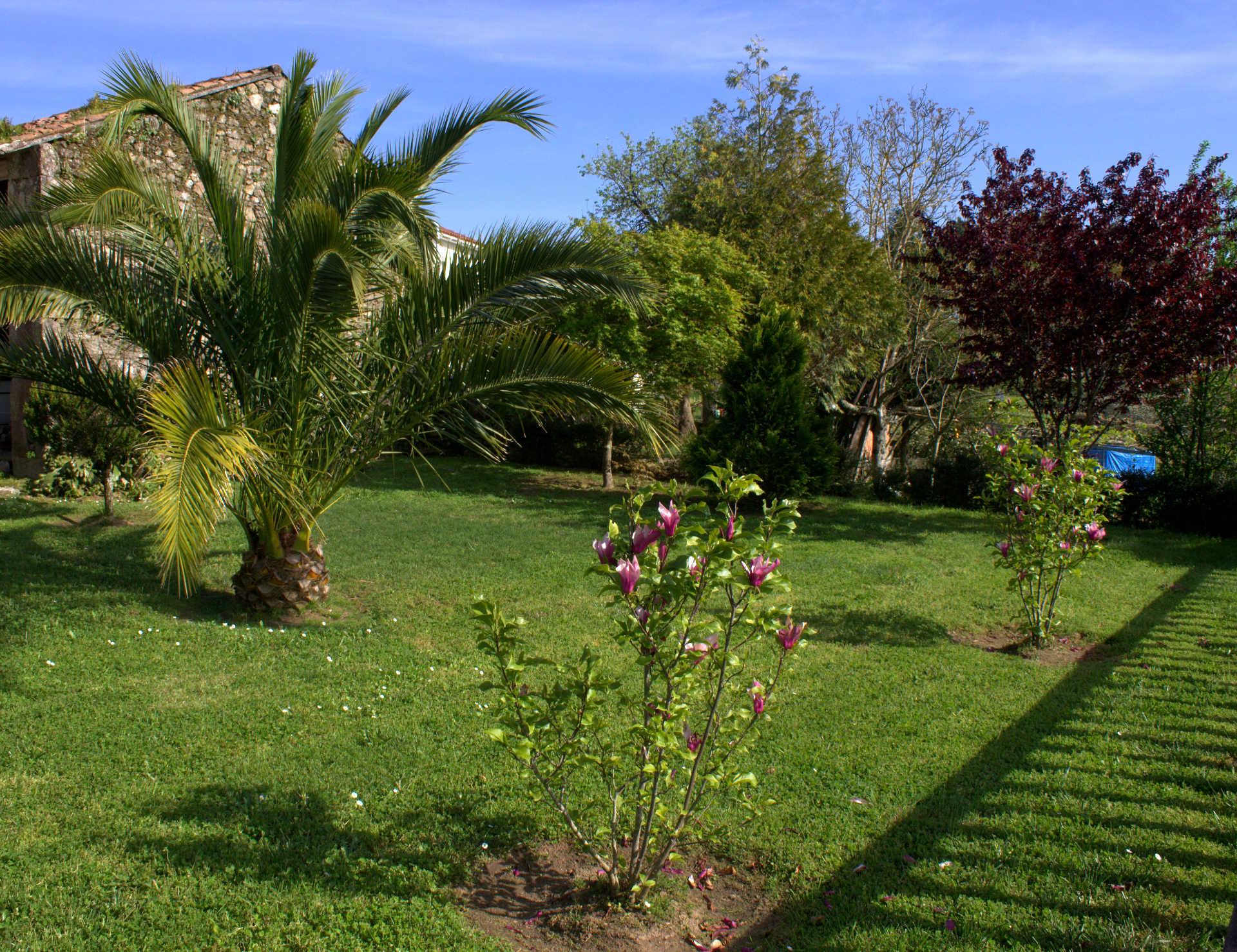 Jardines exteriores palmeras casa rural as seis chemineas